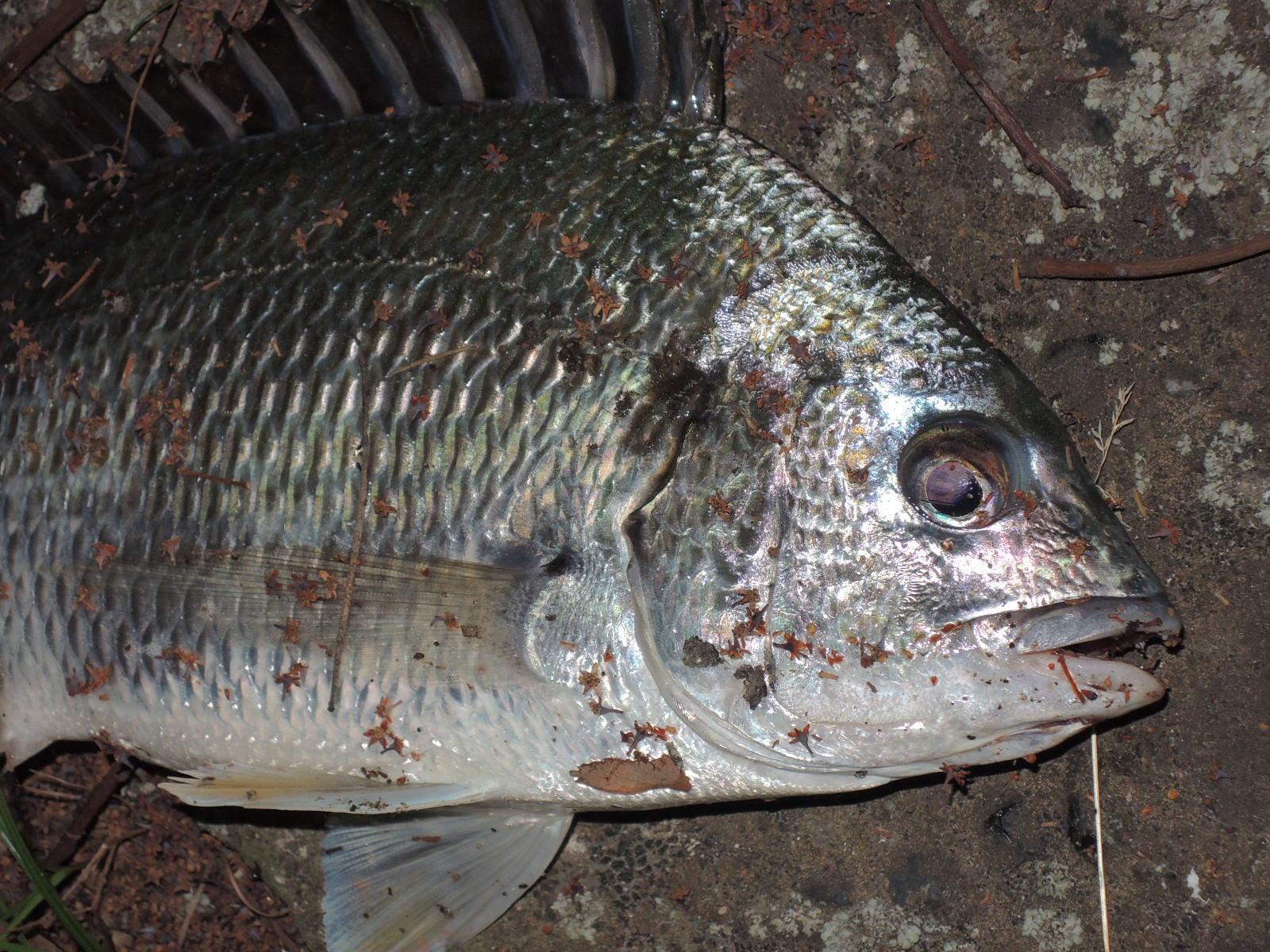 逃がした魚は…_d0241264_1321115.jpg