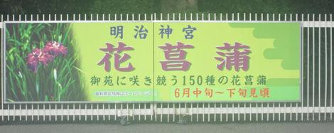 散歩を楽しく/明治神宮の花菖蒲_d0183174_836962.jpg