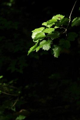 木漏れ日_c0061284_16351513.jpg