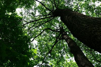 木漏れ日_c0061284_1636242.jpg