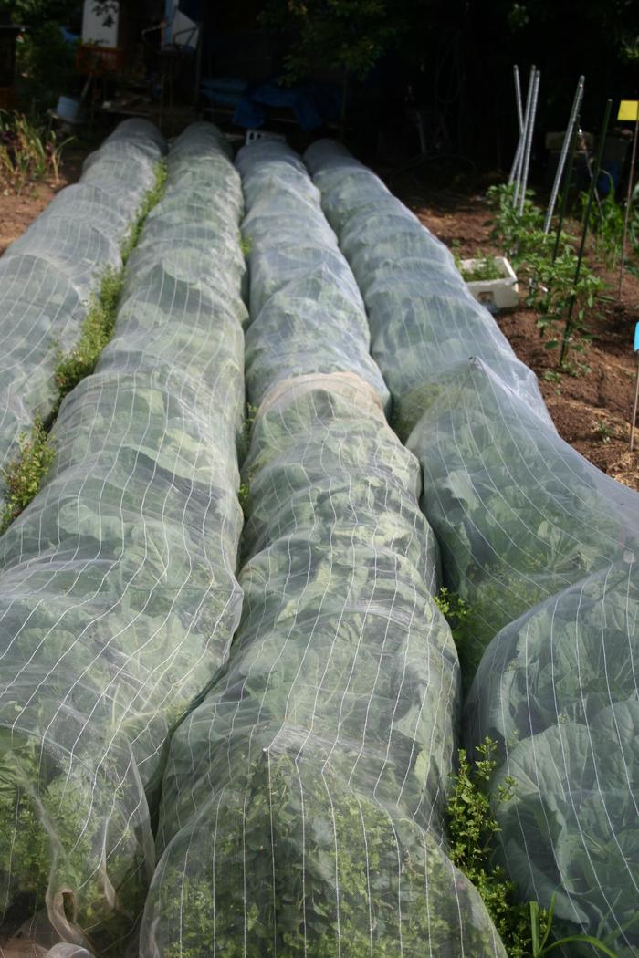 無農薬野菜_a0265606_8405070.jpg