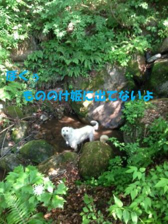 f0176830_126457.jpg