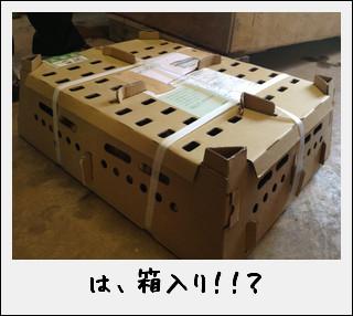 田んぼの働き者が…到着したのだ♪_c0259934_1539612.jpg