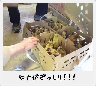 田んぼの働き者が…到着したのだ♪_c0259934_155606.jpg