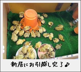 田んぼの働き者が…到着したのだ♪_c0259934_15594159.jpg