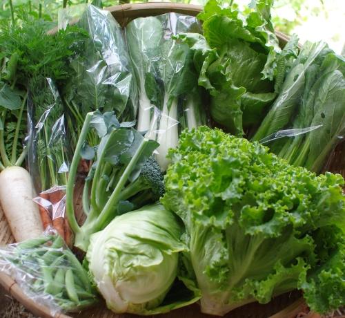 今週の野菜セット(6/11~6/15着)_c0110869_21321030.jpg