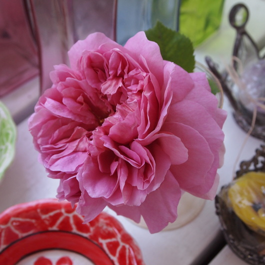 イングリッシュローズが咲いてまいりました。_a0292194_21283576.jpg