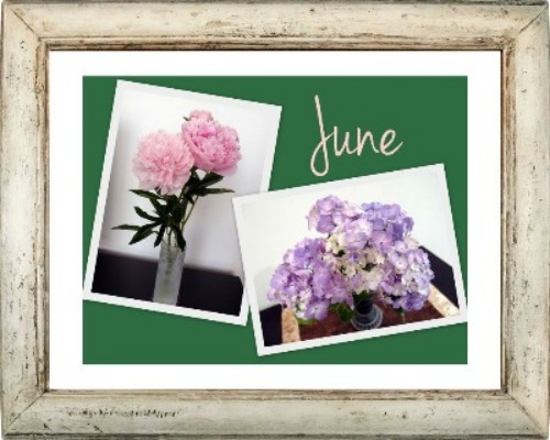 初夏のお花♪_a0231828_1145336.jpg