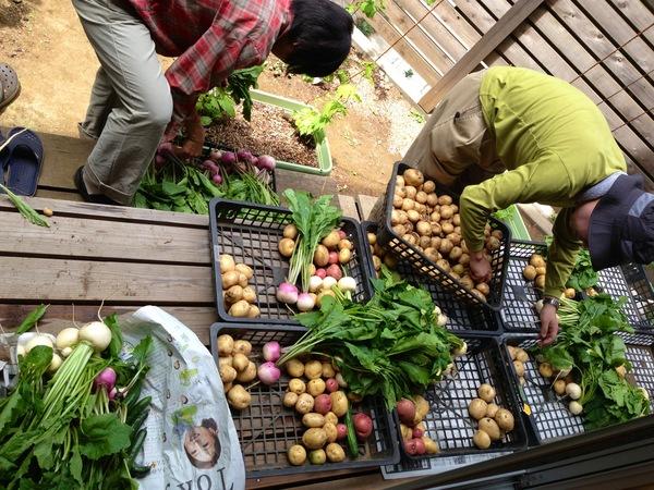 農業クラブ収穫祭♥_c0178231_9592434.jpg