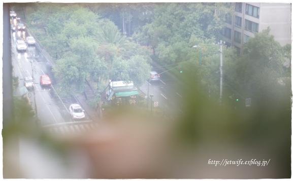 雨季の多肉植物たち_a0254243_23103893.jpg