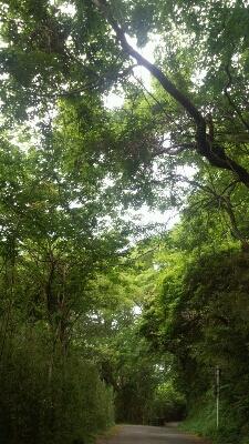 箱根温泉旅行♪_a0153945_11235157.jpg