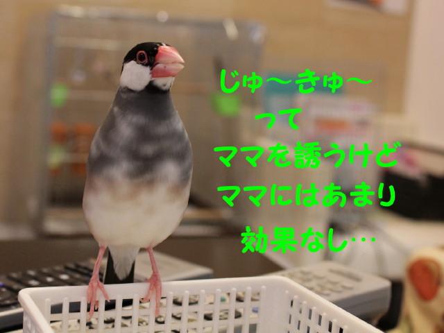 b0158061_2143074.jpg