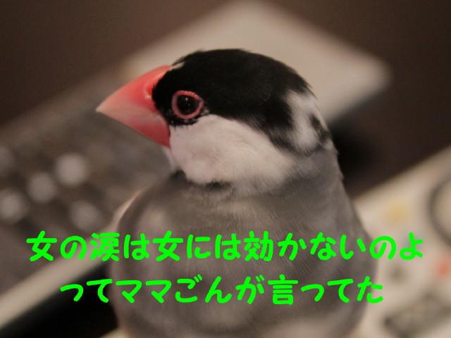b0158061_215133.jpg