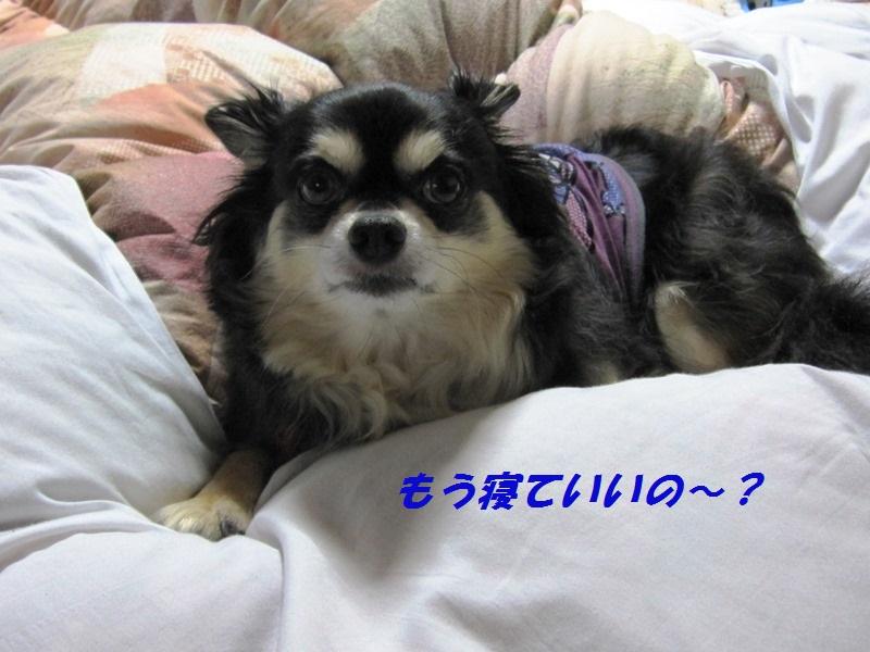 b0150088_8253219.jpg