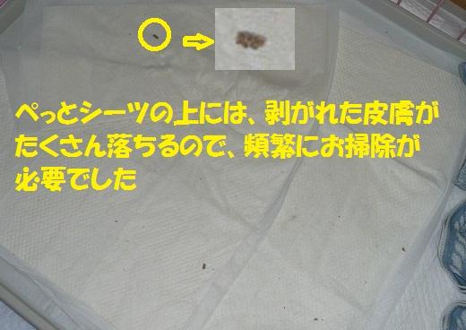 f0121712_14493535.jpg