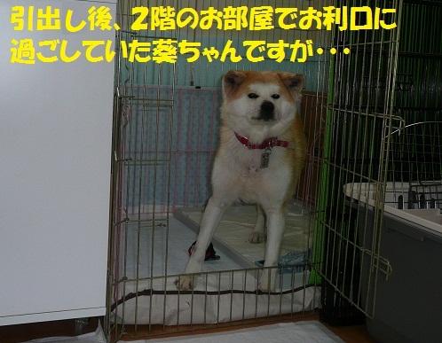 f0121712_14535523.jpg