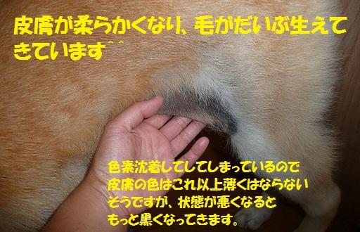 f0121712_1511498.jpg