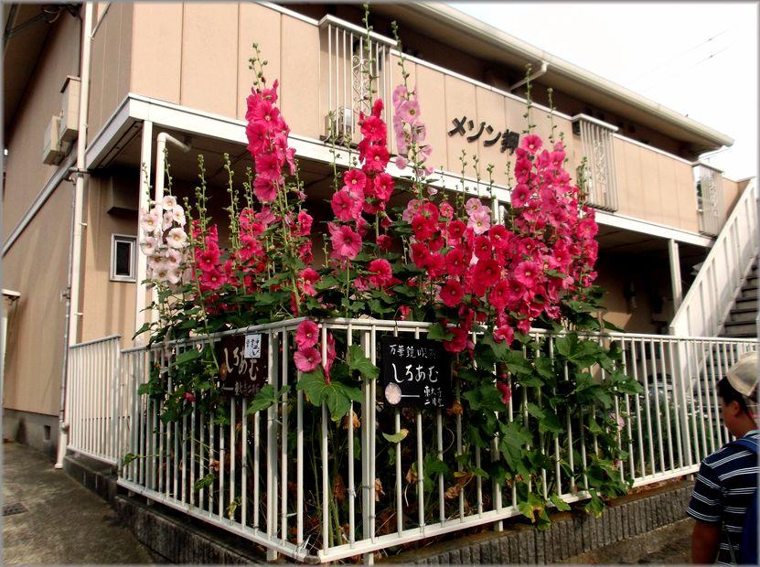 「奈良・・・続・きたまちの風景」_d0133024_9293757.jpg