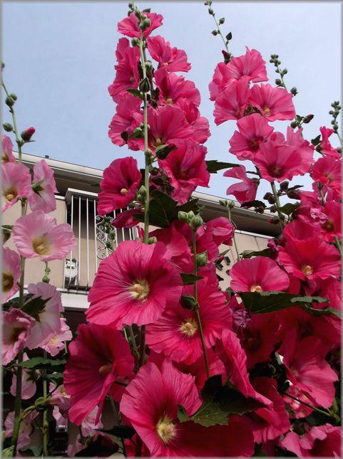 「奈良・・・続・きたまちの風景」_d0133024_9294637.jpg