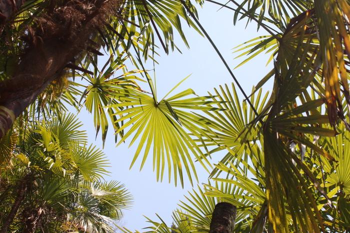 棕櫚の木_d0210537_22495413.jpg