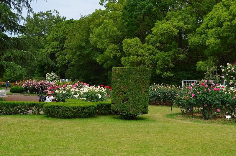 京都植物園のバラ園2013_e0237645_14401910.jpg