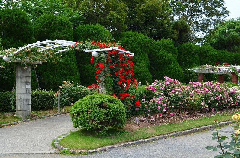 京都植物園のバラ園2013_e0237645_14405444.jpg