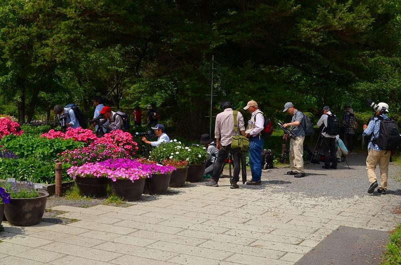 京都植物園花壇の花2013_e0237645_153792.jpg