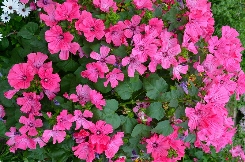 京都植物園花壇の花2013_e0237645_1542577.jpg