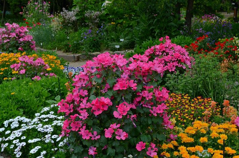 京都植物園花壇の花2013_e0237645_1551093.jpg