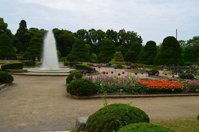 京都植物園花壇の花2013_e0237645_1552662.jpg