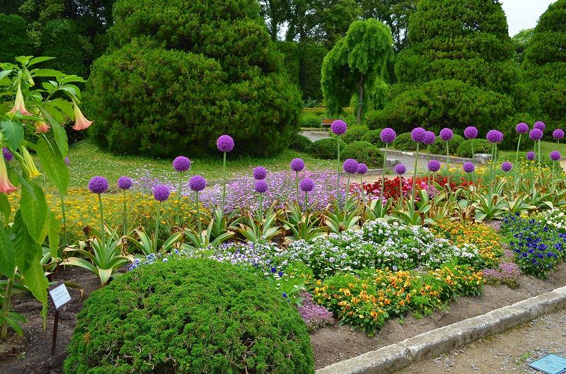 京都植物園花壇の花2013_e0237645_1554266.jpg