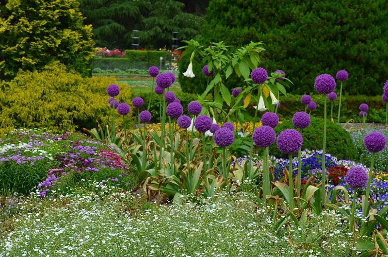 京都植物園花壇の花2013_e0237645_1582427.jpg