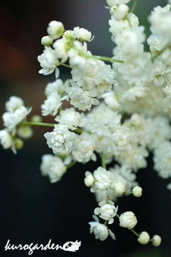 白い花_e0119151_1644102.jpg