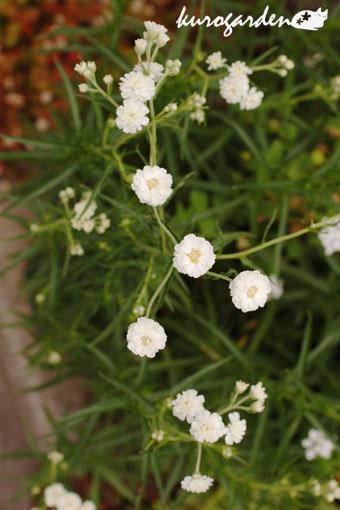 白い花_e0119151_16441822.jpg