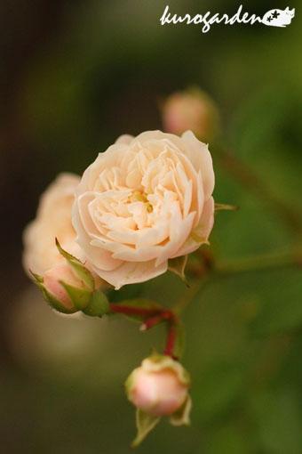 白い花_e0119151_16442350.jpg