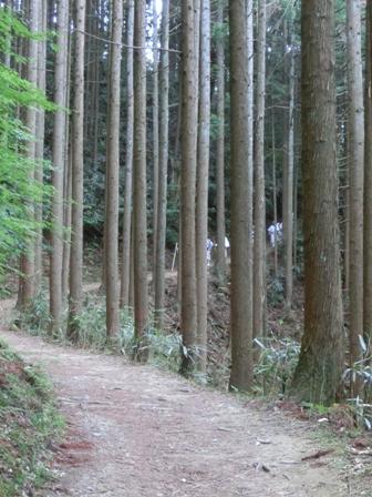 京都&吉野に行ってきました_f0178060_22542119.jpg