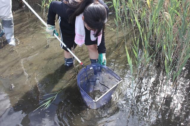 6/15 水生生物を観察します_e0046474_1552094.jpg