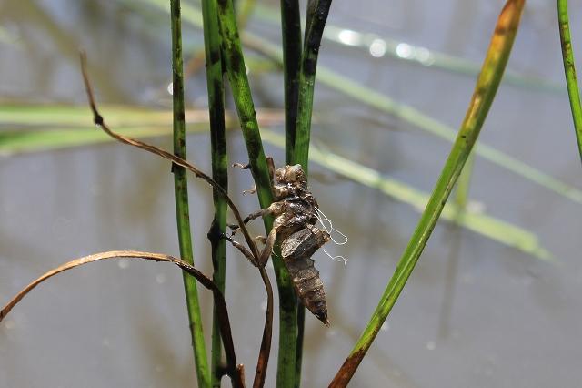 6/15 水生生物を観察します_e0046474_16243272.jpg