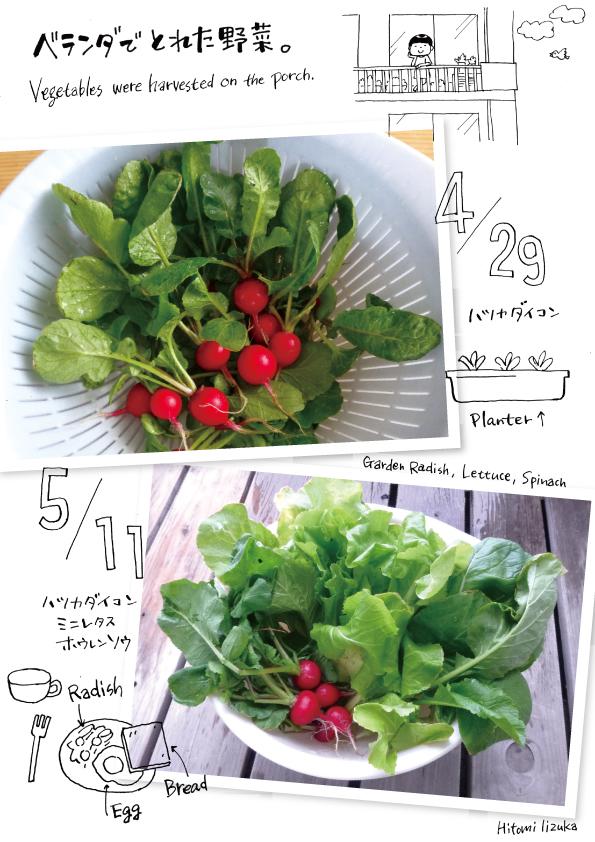 ベランダでとれた野菜。_d0272182_2194785.jpg
