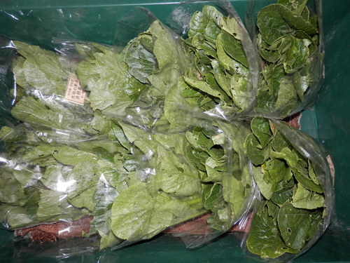 自然農や 有機野菜で。_a0125419_2022692.jpg