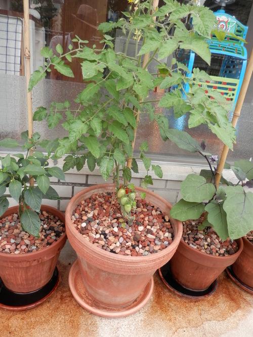 自然農や 有機野菜で。_a0125419_205117.jpg