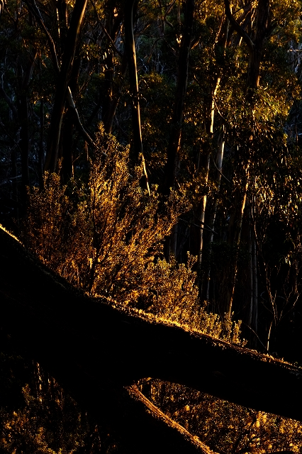 秋の夜明け マウントフィールド_f0050534_9162114.jpg