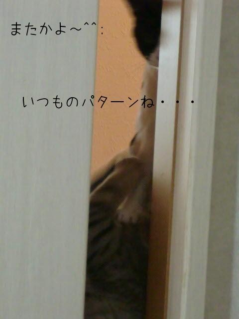 c0259945_1453610.jpg