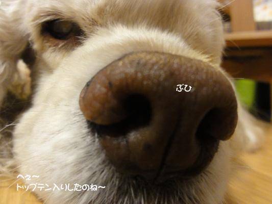 f0218182_19442455.jpg