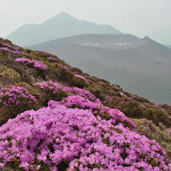 6月7日 韓国岳(Karakunidake) 前半_c0049299_20485027.jpg