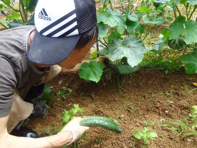 農園作業!_a0154110_18234722.jpg