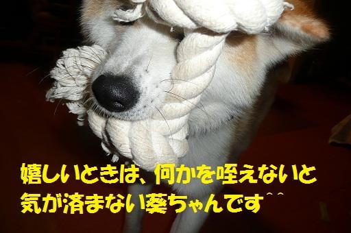 f0121712_8183463.jpg