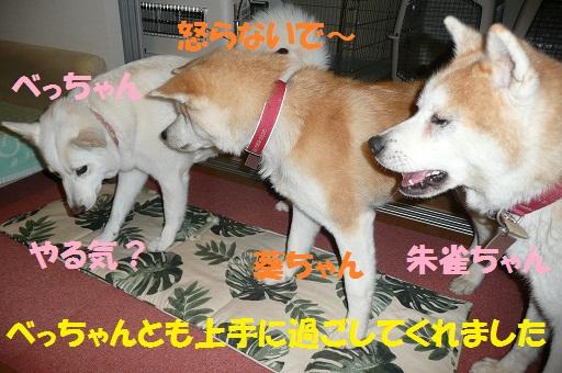 f0121712_834369.jpg