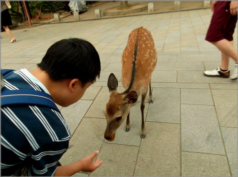 「奈良・・・鹿と遊ぶ」_d0133024_9474015.jpg