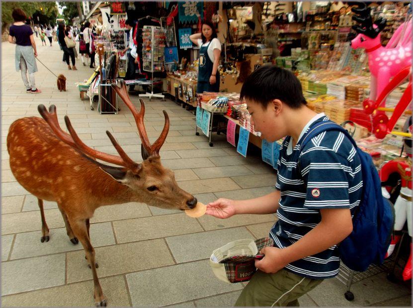 「奈良・・・鹿と遊ぶ」_d0133024_9474988.jpg
